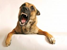 091023-snarling-dog-02